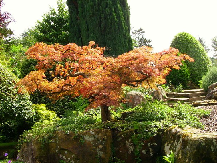 800px-hever_castle_japanese_maple