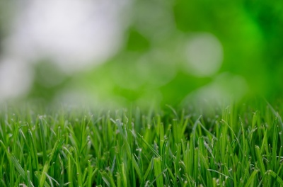 nature-garden-grass-lawn-large