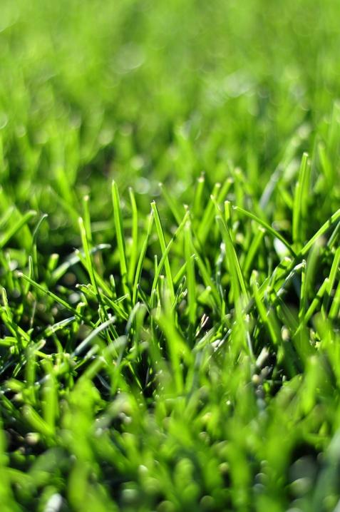 lawn shutterstock_436084852 copy